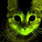 gato brilha no escuro 150x150 Gato aprende a falar durante o banho!
