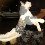 gato ninja 150x150 Os 5 vídeos de gatos mais famosos do YouTube!