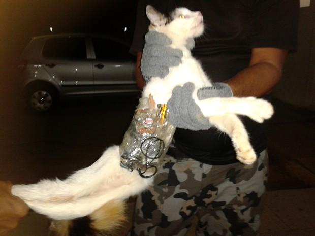 gato ninja Gato ninja tenta entrar em presídio com celulares e serras!