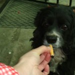 China: cachorro viciado fuma 2 cigarros por dia!