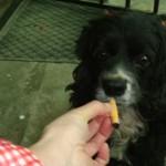 cachorro fuma 150x150 Cachorro faz bagunça e se arrepende. Dá pra acreditar?