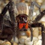 aranha 150x150 homem aranha em crise