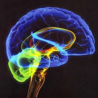 Bizarro: descoberto francês de 44 anos que não tem cérebro!