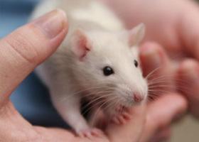 Tecnologia: cientistas lançam pílula que apaga as memórias ruins do cérebro!