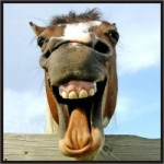 cavalo sorrindo 150x150 yahoo photoshop