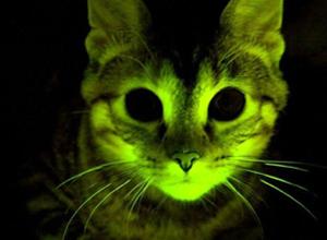 gato brilha escuro