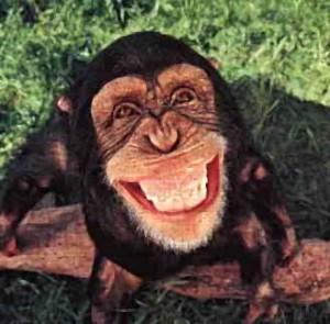 macaco rindo 300x295 Macaco violenta sapo em zoológico de Honolulu!