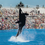 Justiça encalhada: baleias processam parque aquático por escravidão!