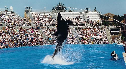 baleia orca Justiça encalhada: baleias processam parque aquático por escravidão!