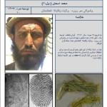 terrorista burro 150x150 Notícias bizarras de 2012: as 7 mais malucas!