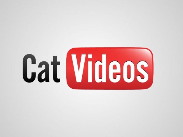 videos de gato Os 5 vídeos de gatos mais famosos do YouTube!