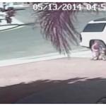 video cachorro ataca garoto 150x150 Cachorro faz bagunça e se arrepende. Dá pra acreditar?