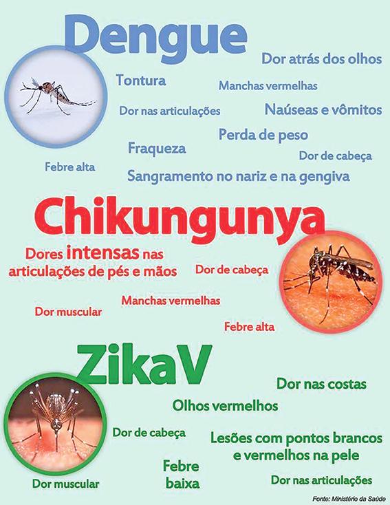 Mosquito CHICO CUNHA: A VERDADE REVELADA, conheça!
