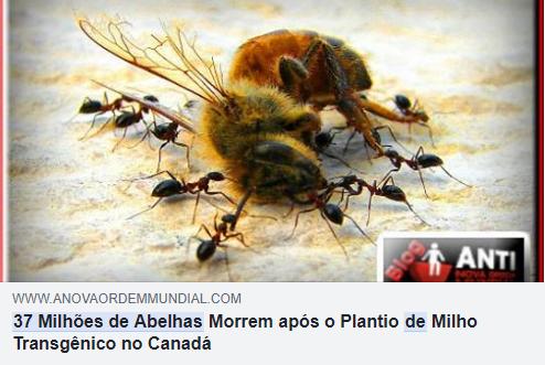 37 milhoes de abelhas2 Plantio de milho transgênico matou 37 milhões de abelhas? Saiba a verdade!