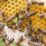 abelha rainha 445329079 1 150x150 Bolsonaro é visto com camisa do PT e cigarro de maconha na mão? Saiba a verdade