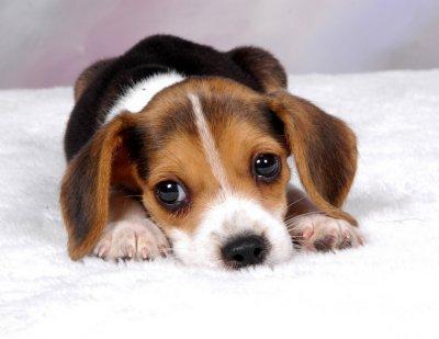 WuffStop – controle o latido do seu cão sem sofrimento